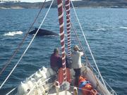 Baleine a bosse
