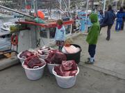 Arrivage viande de baleine a Ilulissat