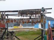 Sechage poissons Oqaitsut