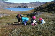 Greenland terre verte