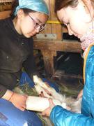 Ina et Aurore avec agneau