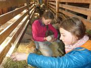 Leonie et Aurore a la bergerie d Ipiutaq
