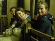 Biverons pour les agneaux