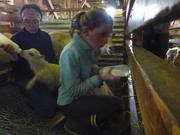 Ina et Aurore biberons agneaux