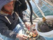 Coquilles St-Jacques groenlandaises par France