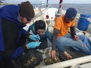 Analyse echantillons coralline
