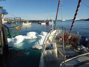 Glacon dans le port d Upernavik