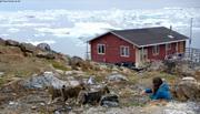 Aurore et chiots Nussuaq