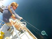 Leonie collecte plancton
