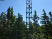 Grimper pour voir au-dessus des arbres