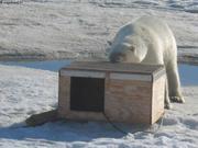 Jin se cache de l'ours