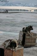 En attendant le degel