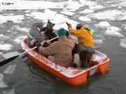 Debarquement chiens