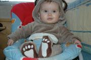 Petit ours brun egare dans l'Arctique