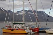 Makore Vagabond Arctica