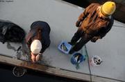 France prepare poissons pour hivernage