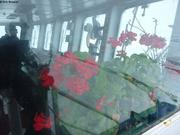 Fleurs a bord