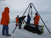 Pesee phoque Weddell 370kg