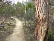 Foret proche de Hobart en Tasmanie