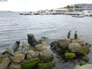 Faune du Grand Sud a l'honneur dans le port de Hobart
